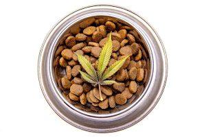 Cannabisolie bij honden
