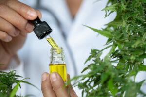 Cannabisolie Vlaanderen