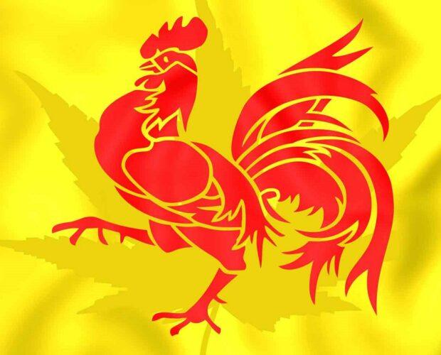 Wallonie en cannabisolie