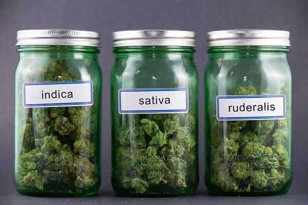 Cannabissoorten