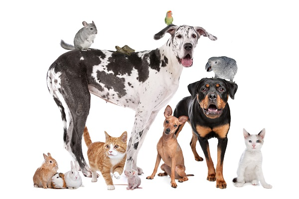 CBD olie of THC olie voor dieren