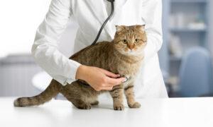 Ervaringen van CBD-olie bij katten