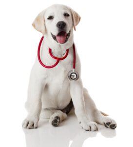 Het effect van CBD en THC op honden