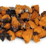 Chaga pure mushrooms